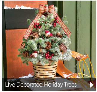 Live Decorated Holiday Trees