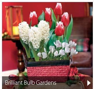 Brilliant Bulb Gardens