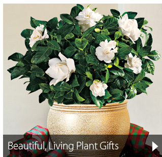 Beautiful, Living Gift Plants