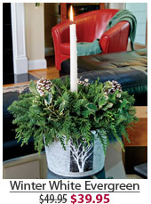 Winter White Evergreen NOW $39.95